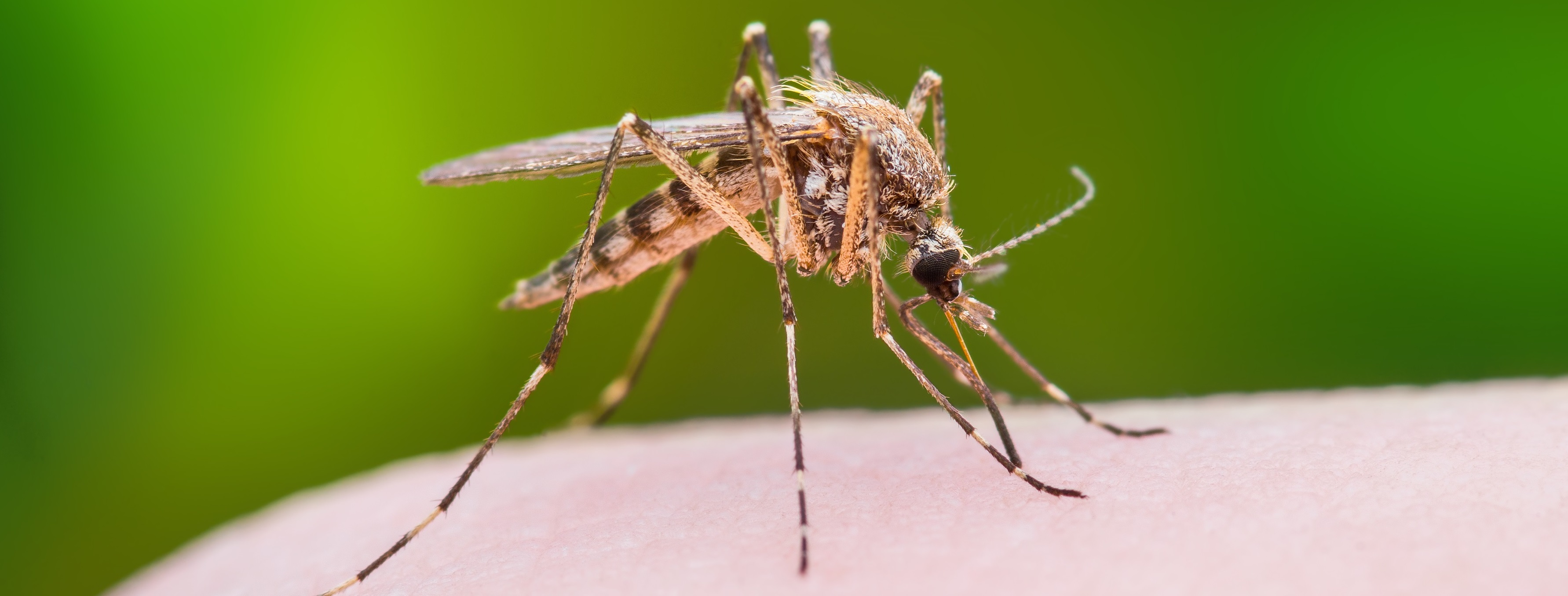 Mathematics research offers new ways to control West Nile transmission